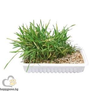 TRIXIE - Трева за котки, кутия - 100 мл.