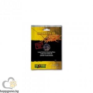 Exo Terra - Щурци XL във вакуумна опаковка, 15 гр