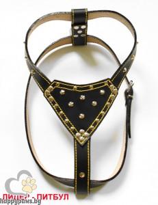 Миазоо - нагръдник Лидер за питбул с метални конуси и украса с подплата, шит, различни цветове