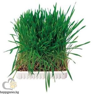 TRIXIE - Трева кутия - 100 мл.
