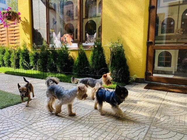 Хайде на разходка!