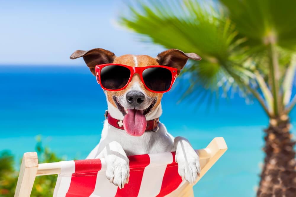 Куче на шезлонг на плажа